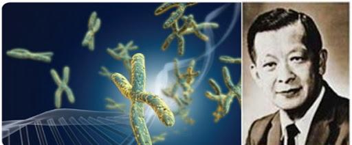 Dr. Joe Hin Tjio (Teori 23 Kromosom)